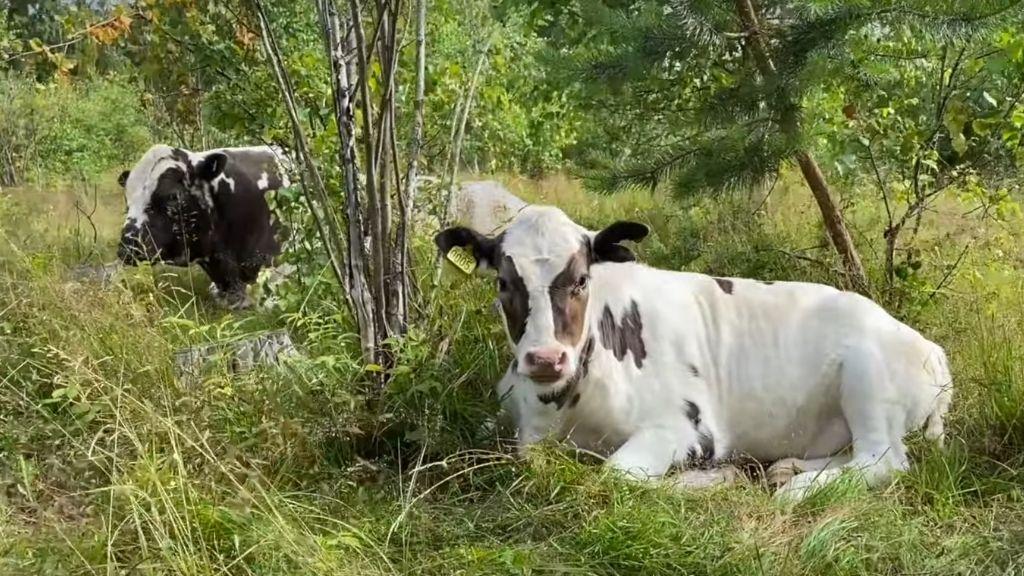 JULY AT THE FARM: WALK AND TALK